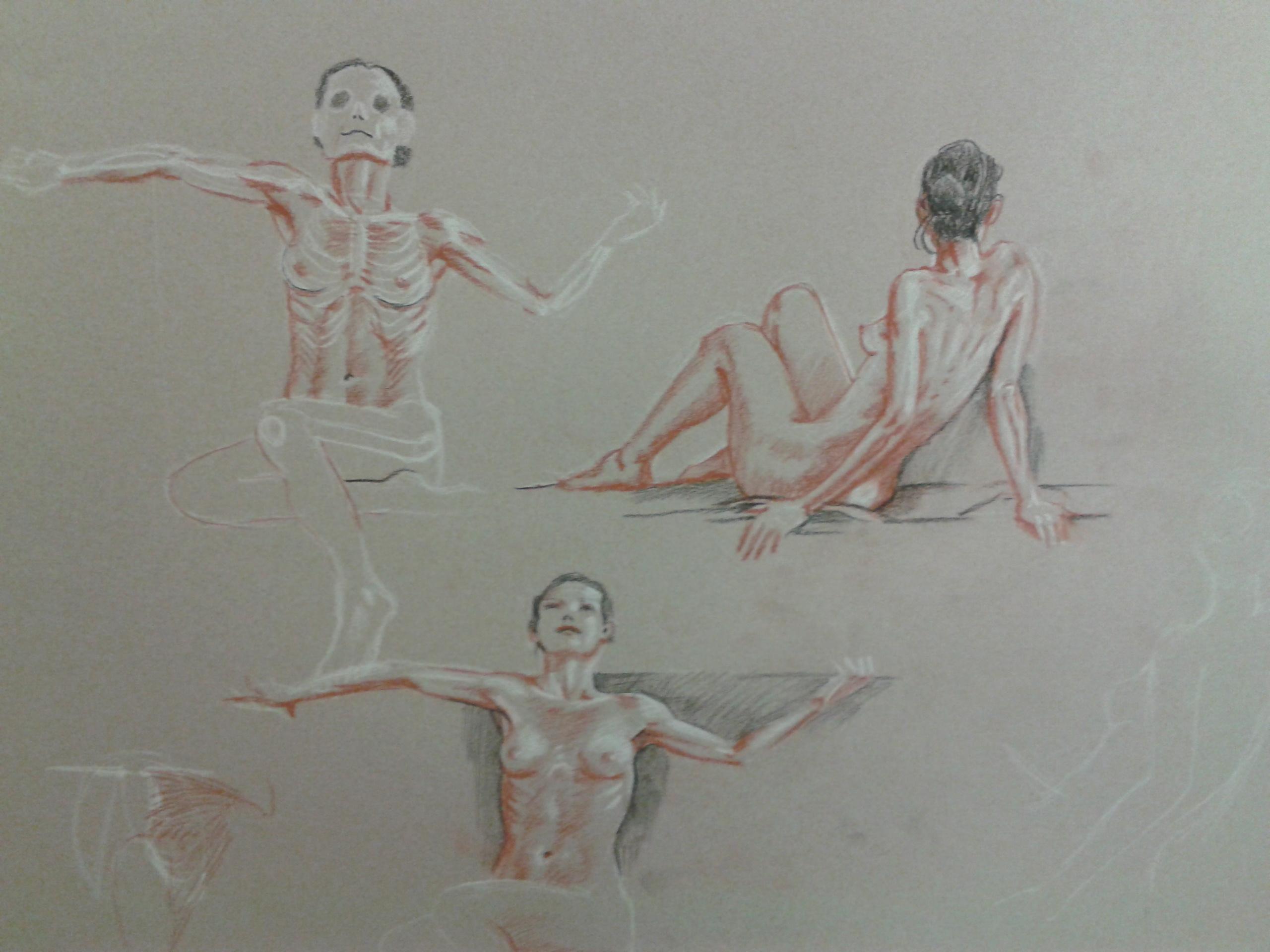 stage morphologie artistique