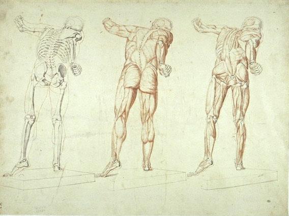 cours morphologie anatomie artistique paris et 94