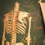 stage anatomie artistique
