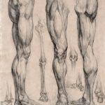 morphologie de la jambe