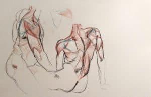 cours de morphologie