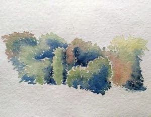 Arbres et végétation réalisé en cours d'aquarelle